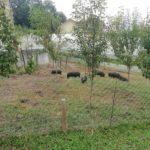 """PPMG-Dragana-3-150x150 Posjet """"Eko agro farmi"""" u Ljubatoviću"""